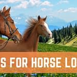 best books for horse lovers