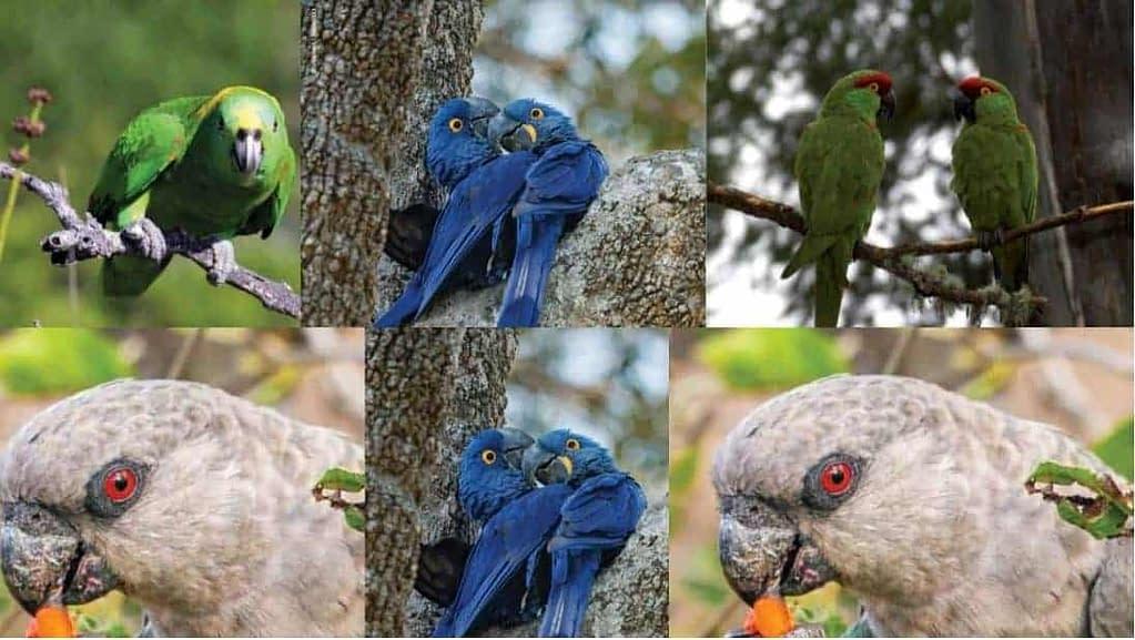 best book on parrots