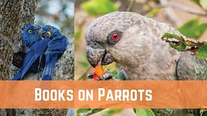 Best Books on Parrots for Bird Lovers