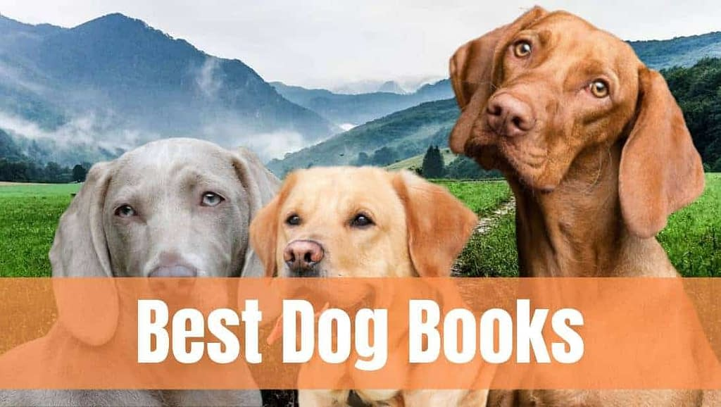 10 best books on dogs